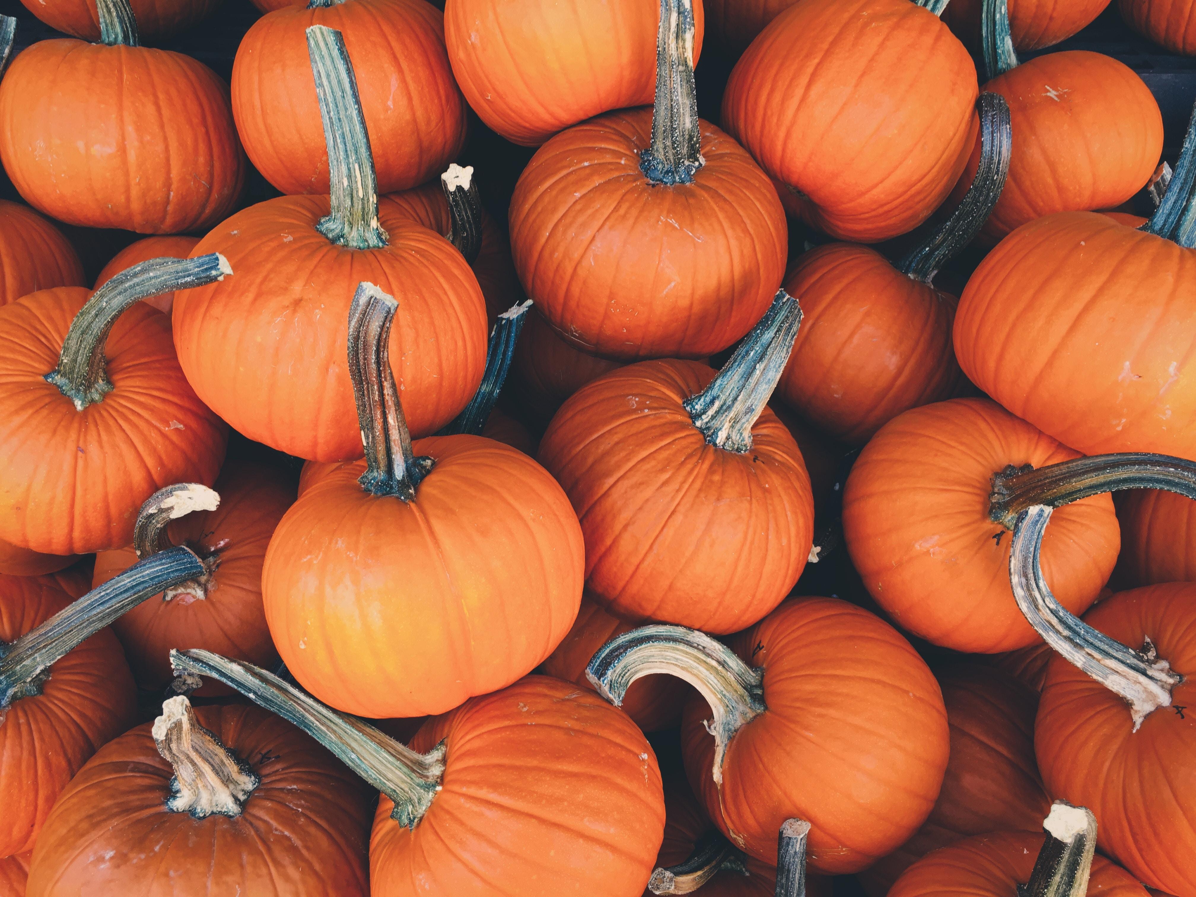 Pumpkin Patch - Thanksgiving
